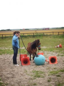 Starters set Natural Horsemanship